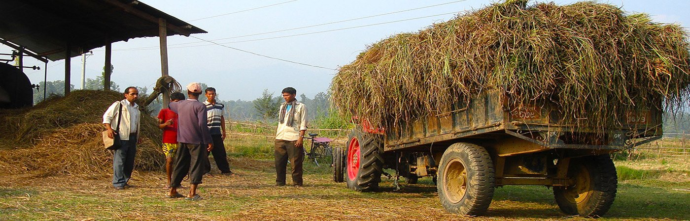 Biomass supply